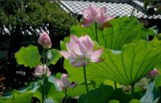 十輪院(じゅうりんいん)